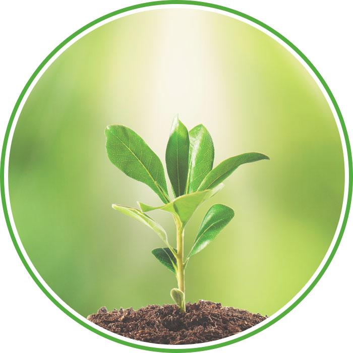 Reiki en Plantas